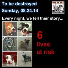 TO BE DESTROYED: 6 Dogs to be euthanized by NYC ACC- SUN.8/24/14. This is a VERY HIGH KILL facility, so their time is short. You may be the only hope for these pups! **** PLEASE SHARE EVERYWHERE!To rescue a Death Row Dog, Please read this: http://urgentpetsondeathrow.org/must-read/ To view the full album, please click here: https://www.facebook.com/media/set/?set=a.611290788883804.1073741851.152876678058553&type=3