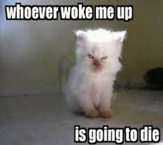 Image result for funny animal quotes