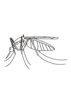mosquito coloring sheets