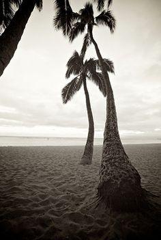 Hawaii 2012 Timeless 3007