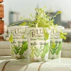 grow your own stirfry kit by the urban farmer | notonthehighstreet.com
