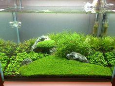 Post your shrimp tanks! - The Planted Tank Forum