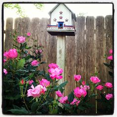 Knockout roses and birdhouse by the fence