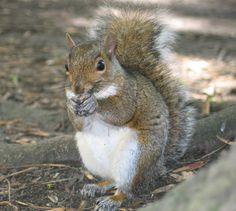 it's a squirrel