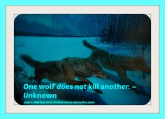 One wolf does not kill another. ~ Unknown - Shou Shu Online