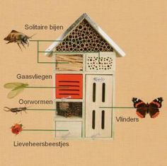 Insect hotel guide