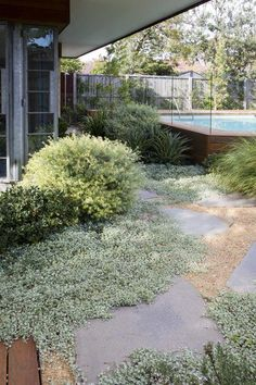 Between house/studio and pool House Landscape, Landscape Design, Garden Design, Dry Garden, Garden Shrubs, Modern Landscaping, Backyard Landscaping, Back Gardens, Outdoor Gardens