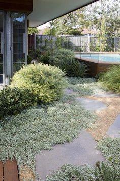 Between house/studio and pool House Landscape, Landscape Design, Garden Design, Modern Landscaping, Backyard Landscaping, Back Gardens, Outdoor Gardens, Australian Native Garden, Coastal Gardens