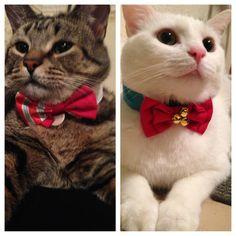 christmas gentlemen cute cats
