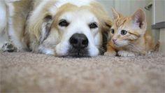 仲良し猫と犬6