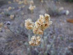 SDC10644, Nature, Pinar Vadohondo, Tinajas, Bodega D.Martín (Villarrobledo, Albacete, España, 7-14 Septiembre, 2013).