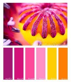 Poppy Pinks Palette