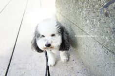 Oreo taking a pee break. After a long day of work! Pet Memorial Gifts, Cat Tags, Collar And Leash, Pet Memorials, Oreo, Pets, Creative, Animals, Vintage