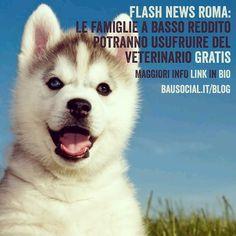 Roma: Veterinario gratis per le famiglie a basso reddito. Per leggere la news di @ennyahelgrin clicca sul link in bio o vai al sito http://ift.tt/2dGTSNC . . #cani #cane #gatto #gatti #roma #italia #veterinario #vet #husky #huskyphoto #huskys #love #life #instadog #Bau #bausocial #news #igersroma #Roma #gratis #animali #pet #pets