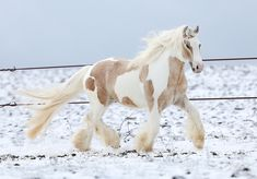 Funny Horse Pictures, Beautiful Horse Pictures, Most Beautiful Horses, Horse Photos, Pretty Horses, Animals Beautiful, Pictures Of Horses, Cute Baby Horses, Big Horses