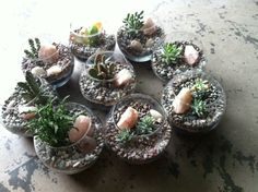 Spoil your loved ones with rose quartz terrariums by Alea Joy. Pick yours up before the 14th!