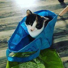 Na da hab ich wohl die Katze im Sack gekauft.   #katze #familienkatze #mimitestetspielzeug #familienleben Paper Shopping Bag, Cats, Animals, Instagram, Family Life, Gatos, Animales, Animaux, Animal