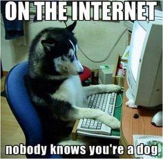 Trên Internet không ai biết bạn là ai :3