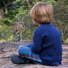 One of our youngest guests meeting a friendly little Klipspringer in camp...  Serengeti Migration Camp. (Image by Silverless)