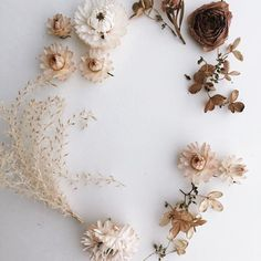 bellesandghosts: ©adoredvintage Sometimes you just gotta stop everything you're doing because all the dried flowers you're about to throw away are too pretty to look at and it must be documented.