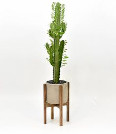 - Mid Century Modern Plant Stand with Cement Pot, Indoor Plant Stand with Concrete Pot, Modern Planter Stand with Cement Pot Small Mid Century Modern Plant Stand with Cement Pot Indoor Concrete Pots, Modern Planters, Concrete Planters, Indoor Plant Pots, Indoor Planters, Planter Pots, Modern Plant Stand, Diy Plant Stand, Industrial Chic
