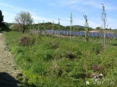 mitigazione del campo fotovoltaico a un anno dallimpianto