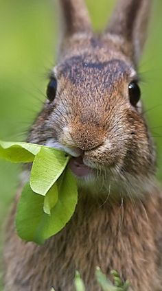 WELL HELLO THERE CUTIE! I AM A BIG FAN OF SALAD AS WELL....YUM!