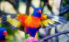 Top seres coloridos | Mundo Gump