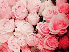 love! roses are wonderful!