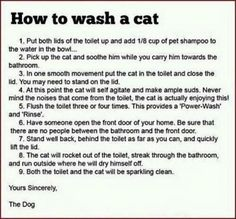 How to wash a cat.