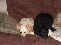 Merry and Angel.... I first fostered them together. Merry was then moved to the Blackman's to be fostered.