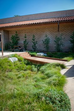Carex pansa, an IdealMow lawn, fills a bioswale bordered by Catalina Cherry and San Miguel Island Buckwheat.