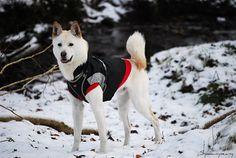 Pungsan #Dog / Hangul / Hanja / Korean Jindo #Dogs