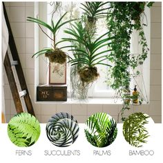 There are a number of low maintenance indoor bathroom plants that thrive in the humid, tropical conditions of a bathroom, and additionally help purify the air. To make any sized bathroom space alive, add some greenery.