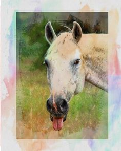 Horse Notebook: College Ruled - Lined Journal - Composition Notebook - Soft Cover Writer's Notebook or Journal for School - College or Work - Watercolor Horse Sticking Tongue Out Sticking Tongue Out, Watercolor Horse, Writers Notebook, Creative Writing, Cow, Composition, College, Printable, Posters