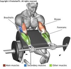 Build bigger biceps with this one trick BICEPS - BARBELL PREACHER CURL