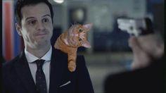 Seguro que el gato le es de mala influencia