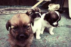 Intro to Animal Photography