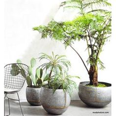 Roost Braza Wide Planter - Set of 3