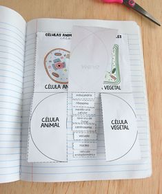 Partes de la célula plegable #libretainteractiva #célula #celulavenndiagram # School Study Tips, Interactive Notebooks, Kids Education, Projects To Try, Bullet Journal, Stickers, Plant Cell, Animal Cell, Nuclear Membrane