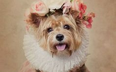 Una fotografa scatta romantici ritratti retro-syle ai cani abbandonati per dare loro una seconda chance La fotografa americana, Tammy Swarek, ha scattato una serie di foto di posa agli ospiti del canile di El Dorado, adornandoli con indumenti e copricapi retrò. Il risultato tocca il cuore. Il fine del  #arte #fotografia #animali