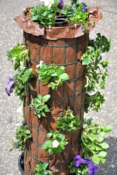 Discover how to make a gorgeous flower tower! See the fully grown tower here! It… Discover how to make a gorgeous flower tower! See the fully grown tower here! It's a really beauty! Water Flowers, Diy Flowers, Potted Christmas Trees, Flower Tower, Tower Garden, Plant Tower, Self Watering, Flower Beds, Geraniums