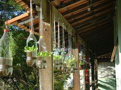 Hanging flowers from plastic bottles