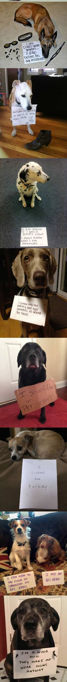 60 New Ideas Funny Pets Pictures Dog Shaming Cute Funny Animals, Funny Animal Pictures, Funny Cute, Funny Dogs, Funny Humor, Super Funny, Cute Puppies, Cute Dogs, Pet Sitter