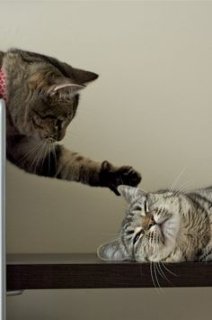This is what one of my cats does to the other one. The one who says ugly words when she even sees him.