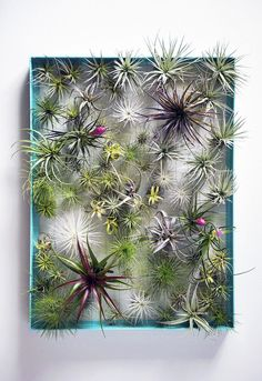 Plant Frame - Large AirplantFrame - a whole website of awesome uses for air plants!AirplantFrame - a whole website of awesome uses for air plants! Air Plants, Cactus Plants, Indoor Plants, Indoor Herbs, Cacti Garden, Moss Garden, Indoor Gardening, Air Plant Display, Vertical Farming