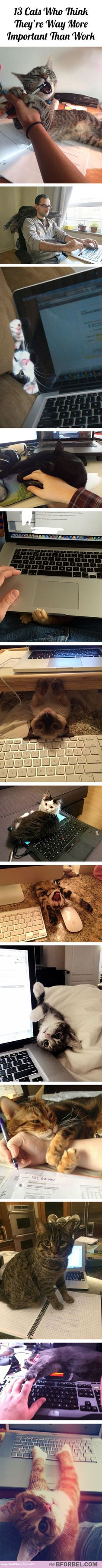 13 cats who think they're way more important than work