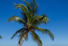 Caribbean Beach scene Beach Backdrop premade Backdrop | Etsy Dinosaur Background, Beach Backdrop, Wall File, Tree Paintings, Digital Backgrounds, Beach Scenes, Beautiful Images, Caribbean, Backdrops