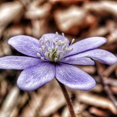 Fall Flowers, Autumn, Purple, Pretty, Plants, Nature, Flowers, Autumn Flowers, Fall
