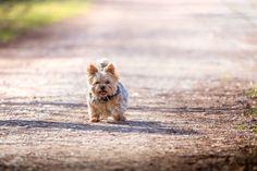 Little Dog by Martin1969 via http://ift.tt/2nDGw7Q